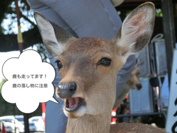 Shikao_2